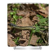 Eastern Garter Snake - 9167 Shower Curtain