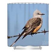 Edward Scissor Tail Shower Curtain