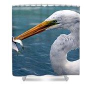 Egret Feeding  Shower Curtain