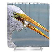 Egret Finishing Lunch  Shower Curtain
