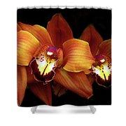 Orange Cimbidium Orchid Shower Curtain