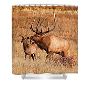 Elk And Mate In Rocky Mountain Meadow Shower Curtain