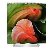 Emerging Tulips Shower Curtain