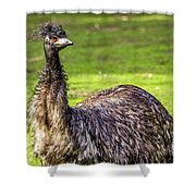 Emu Do Shower Curtain by Kate Brown