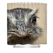 Emu Print 9052 Shower Curtain