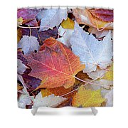 End Of Autumn Shower Curtain by David Millenheft