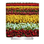 Endless Beautiful Tulip Fields Shower Curtain