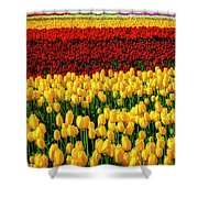 Endless Tulip Fields Shower Curtain