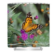 Equinox Butterfly  Shower Curtain