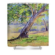 Eucalyptus Tree Australia Shower Curtain