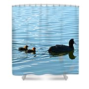 Eurasian Coot And Offspring In Ria Formosa. Algarve, Portugal Shower Curtain