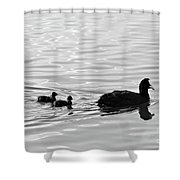 Eurasian Coot And Offspring In Ria Formosa, Portugal. Monochrome Shower Curtain