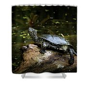 European Pond Turtle Sitting On A Trunk In A Pond Shower Curtain
