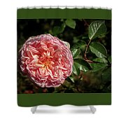 Evelyn Rose Shower Curtain