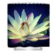 Evening Water Lily Shower Curtain
