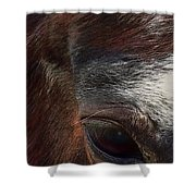 Eye Of A Horse  Shower Curtain by Shelli Fitzpatrick