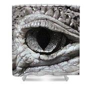Eye Of Alligator Shower Curtain