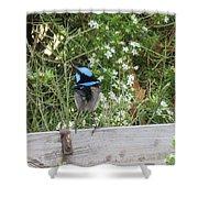 Fairy-wren 3 Shower Curtain
