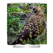 Falcon Chimango Caracara, Tierra Del Fuego National Park, Ushuaia, Argentina Shower Curtain