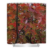 Fall Collage Shower Curtain