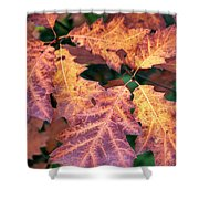 Fall Flames Shower Curtain by Whitney Goodey