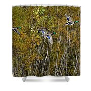 Fall Time Mallards Shower Curtain