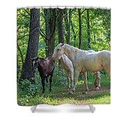Family Of Horses Shower Curtain