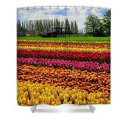 Farming Tulips Shower Curtain