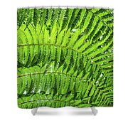 Fern Shower Curtain by Nick Bywater