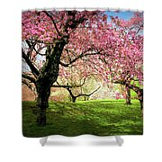Cherry Orchard Afternoon Shower Curtain