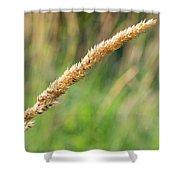 Field Grass Shower Curtain