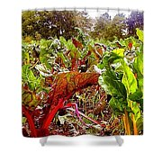 Field Of Chard Shower Curtain