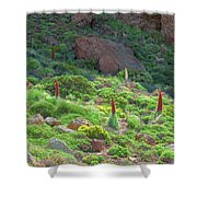 Field Of Echium Wildpretii In The Teide National Park Shower Curtain