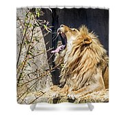 Fierce Yawn Shower Curtain by Kate Brown