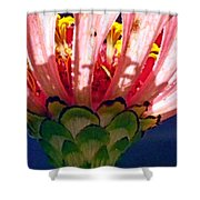 Filtered Shower Curtain
