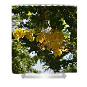 First Golden Leaves Shower Curtain