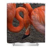 Flamingo Couple Shower Curtain