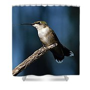 Flick Of The Tongue - Ruby-throated Hummingbird Shower Curtain