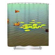Floating Ducks Shower Curtain