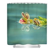 Floating Petunia Shower Curtain by Dawn Richards