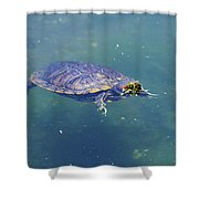 Floating Turtle Shower Curtain