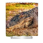 Florida Gator 1 Shower Curtain