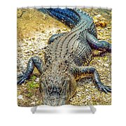 Florida Gator 2 Shower Curtain