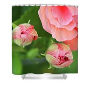 Flower Buds Rising Shower Curtain