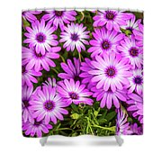 Flower Patterns Collection Set 04 Shower Curtain