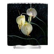 Flowerography Shower Curtain