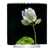flowers of a Bougainvillea w4 Shower Curtain