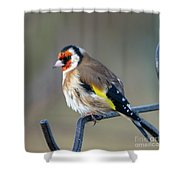 Fluffy Goldfinch Shower Curtain