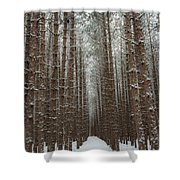 Forest In Sleeping Bear Dunes In January Shower Curtain