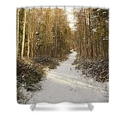 Forest Track In Winter Shower Curtain